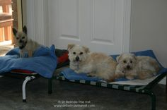 Percy, Jack & Cassie chilling out on their small dog beds