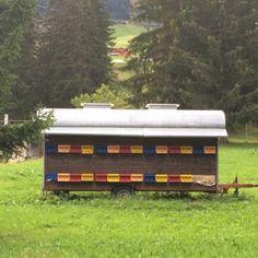 Apidea Spacing - Bridget's photo - Swiss bee trailer