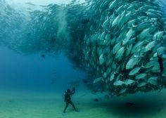Wave of Fish  Photo by Octavio Aburto | Photo Location: Cabo Pulmo, Baja California Sur, Mexico >>> What an unbelievable shot!