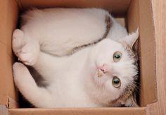 Warum Katzen Kartons als Spielzeug lieben!