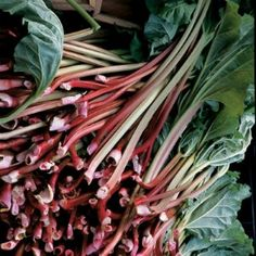 How to grow rhubarb.