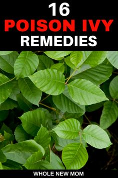 Holistic Remedies - A Poison Ivy Rash doesn't have to ruin your summer. Try these home remedies for poison ivy rash and learn how to avoid getting it in the first place! Holistic Remedies, Natural Health Remedies, Natural Cures, Natural Healing, Herbal Remedies, Natural Life, Natural Skin, Natural Beauty, Poison Ivy Cure
