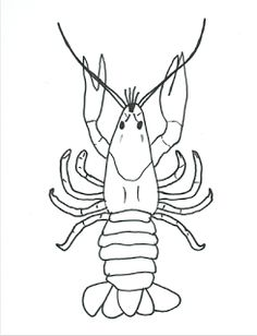 Instructions for how to draw a crayfish (aka, mudbug, crawfish, crawdad), along with a description of crayfish anatomy. Traceable versions also available. Hundred Acre Woods, Fabric Ornaments, Applique Fabric, Outdoor School, School Projects, Anatomy, Cricut, Drawings, Teacher
