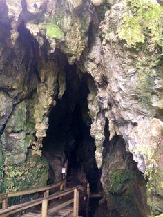 Kawiti Glow Worm Caves, bay of Island New Zealand