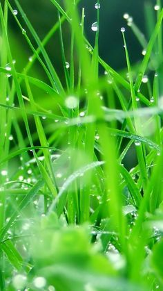 Green Clarity Wallpapers For Nokia Mobile Samsung Galaxy
