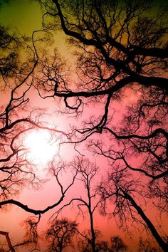 Trees with gorgeous  colored sky