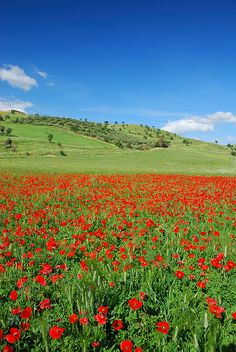 Spring in Sicily / near Agira (Enna) Italy via flickr