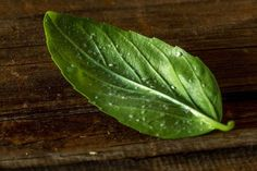 Musculițele albe sunt o adevărată pacoste pentru legume și pentru plantele din ghivece. La plac serele și balcoanele închise, unde ... Salvia, Plant Leaves, Mai, Cottages, Gardening, Interior, Houses, Agriculture, Diet