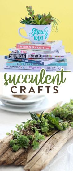 Succulents add  such a beautiful touch to any room. Check out these Succulent Craft Projects we  have rounded up for you here!  #diy #crafts  #teencrafts #projects #diycrafts #diyprojects #fundiys #funprojects #diyideas  #craftprojects #diyprojectidea #teencraftidea Diy Projects For Teens, Crafts For Teens, Easy Diy Projects, Fun Crafts, Craft Projects, Craft Ideas, Christmas Gifts For Teenagers, Cool Gifts For Teens, Diy For Teens