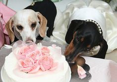 Robbie and his bride eat the cake ..be blessed 4 ever and ever together