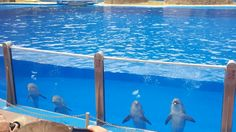 Gran canaria- Dolphin show