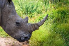 277 of us has been killed this year already. Stop the slaughter! Animal Species, Endangered Species, Game Reserve, Nature Reserve, Animal Welfare, Ecology, Spiral, South Africa, Wildlife