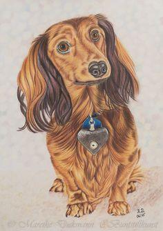 Sausage dog. drawing in colored pencil. Dackel, Zeichnung mit Buntstiften