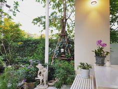 "19 Likes, 1 Comments - Solarflare (@pop.dna) on Instagram: ""ในยามเช้า เริ่มวันที่ดีทั้งใจกาย  #LittleGarden #ForGoodMorning  #Medicine #Gardener #Blossom"""