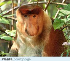 regenwoud dieren - Google zoeken