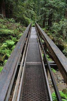 Bridge Built On Fallen Redwood This is such an awesome bridge. Its built on top of a fallen giant redwood and it leads to paradise. (Marin, California - 6/2015)