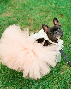 She's all set for the party in her pink tutu!