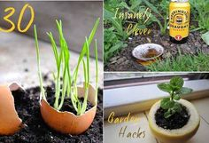30 Insanely Clever Gardening Tricks. In case I decide to start gardening when I move back to CA.
