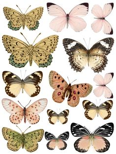 This is cool. Print it, flip it on the middle, stick it, then people will see it as a real butterfly :)
