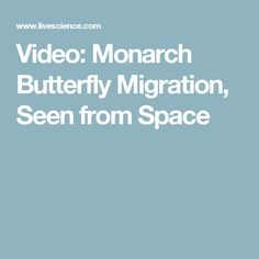Video: Monarch Butterfly Migration, Seen from Space