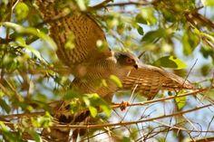 Ruaha National Park, zuid-Tanzania #Tanzania #Ruaha National Park http://www.mambulu.com/safari/tanzania17/reissuggesties-tanzania/359-fly-in-wildlife-safari-zuid-tanzania.html#dag-4-ruaha-national-park