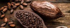 Kakaó, kakaóbab, kakaóvaj - Természet Patikája Egyesület