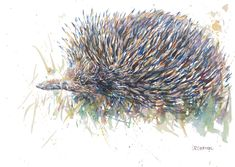 """Echidna "" by Justine Cadman. Paintings for Sale. Bluethumb - Online Art Gallery Animal Paintings, Paintings For Sale, Original Paintings, Australia Animals, Echidna, Buy Art Online, Unique Animals, Watercolor Artwork, Texture Art"