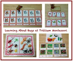 A collection of kid friendly insect activities with of life cycles, free printables, specific activities for grasshoppers, butterflies, ladybugs, honey bees, and ants!