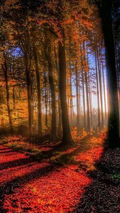 Maple, Light, Shadow, Forest, Lothlorien