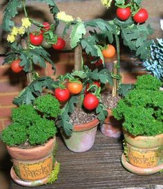 Dolls house Miniatures     12th scale Herbs and tomato plants