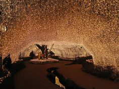 Fairy lights at the Aso Farm Land in Japan! Lichterkette auf dem Aso Farm Land in Japan! Lights Tumblr, Twinkle Lights, Twinkle Twinkle, Icicle Lights, Photos Of The Week, Fairy Lights, Christmas Lights, Christmas Light Displays, Just In Case