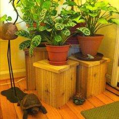 DIY cedar plant stands. Super easy to make.