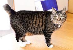 2017.09.05 . くぅちゃんのフォルム(*´罒`*)ニヒヒ♡ . 11歳の #幼児体型 に萌えます(笑) . #愛猫 #ねこ #猫写真 #ねこ部 #看板猫 #にゃんこ #にゃんだふるらいふ #わたしの仕事は元気でいることです #みんねこ #大事な子 #かけがえのない家族 #長生きしてね #キジトラ #白足袋 #可愛いすぎる #猫のいる暮らし #猫好きな人と繋がりたい #ig_japan #ニコン #ニコンdf #NikonDf #にこん日和 #一眼レフ #デジタル一眼レフ #単焦点 #写真好きな人と繋がりたい #ファインダー越しの私の世界 .