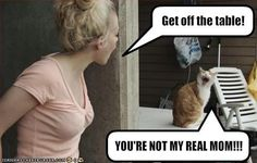 lol cat: YOUR NOT MY MOM!!!!!!!!!!!!!!