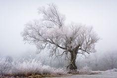 Frost Photography - Patrick Hübschmann