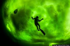 Silhouetted against a dazzling backdrop of the Northern Lights, this diver appears frozen in time in the bitterly cold waters of the Arctic Circle.    The stunning snap was taken by photographer George Karbus, who drilled through the 30cm ice and took an exceptionally cold plunge in order to get the perfect shot.