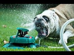 Ultimate Funny Dogs vs Sprinklers Compilation 2013 [HD]