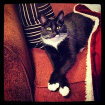 Los gatas siempre cruzan las patas