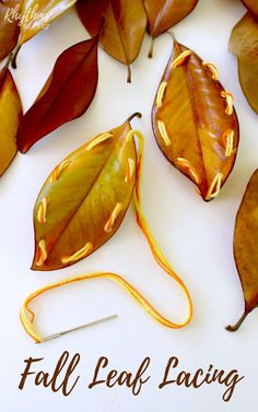 Fall leaf lacing is a fun beginning sewing project for kids. Learning to sew is an easy way to develop the fine motor muscles in the hand necessary for writing and more detailed hand work. Using sturdy fall leaves to practice sewing instead of lacing card Autumn Activities For Kids, Kids Learning Activities, Craft Activities, Motor Activities, Toddler Activities, Elderly Activities, Autumn Crafts, Nature Crafts, Lacing Cards
