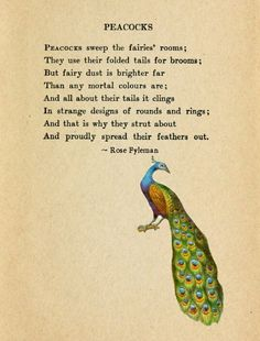 and Fairies Brooms - I want a peacock for a broom! Peacock Art, Peacock Feathers, Peacock Decor, Peacock Painting, Peacock Quotes, T 64, Symbols And Meanings, Peafowl, Owls