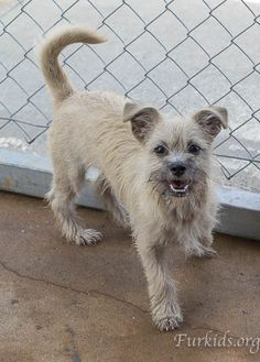 ADOPTED!  Butter Pecan is a 6-month old Terrier mix puppy.   She is a happy little dog with a big smile.  To view available dogs, go to https://furkids.org/dog-adoptions.