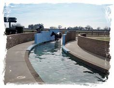 RUNNING HORSE - Equine Training And Wellness Center - Lay ups