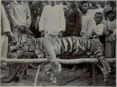 Man etaer of Sibolga, Sumatra.