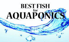 Top 9 Best Aquaponics Fish Aquaponics is an amazing way to garden. And the workhorses of an aquaponics system are the aquaponics fish. As discussed in other pages, Aquaponics is a natural process whereby fish are raised in an aquarium, and their waste is pumped vertically into grow beds. Waste is