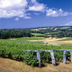 Margaret River, Western Australia - should be on every wine-traveller's must visit list