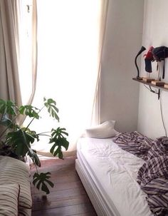 simple white bedroom with lots of plants and sunlight