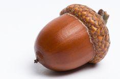 acorn - Google-søk