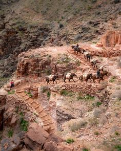 The Phantom Ranch Hike - a once in a lifetime experience — Walk My World Grand Canyon Lodging, Grand Canyon Hiking, Bright Angel Trail, Indian Garden, Arizona Road Trip, Colorado River, Once In A Lifetime, Day Hike, Nice View