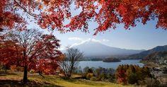 """O outono está a toda no Hemisfério Norte e, para admirar as belezas naturais desta época do ano, nada melhor do que contemplar o Japão. O país nipônico ganha um colorido especial entre os meses de outubro e novembro, com as folhas de suas árvores exibindo tons avermelhados e formando paisagens únicas entre templos xintoístas milenares e cenários bucólicos. A foto acima mostra o Monte Fuji """"emoldurado"""" pela folhagem outonal das árvores que o rodeiam"""