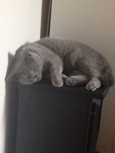 Oliver my British Blue Shorthair - mum I can fit on here, see!